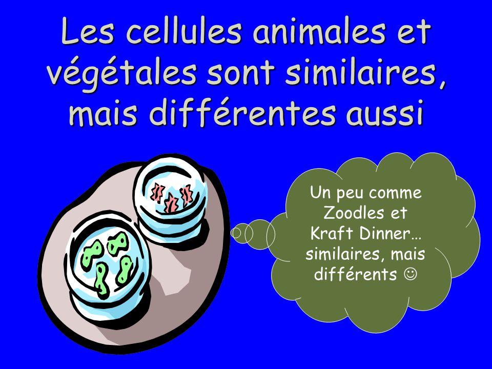 Un peu comme Zoodles et Kraft Dinner… similaires, mais différents 