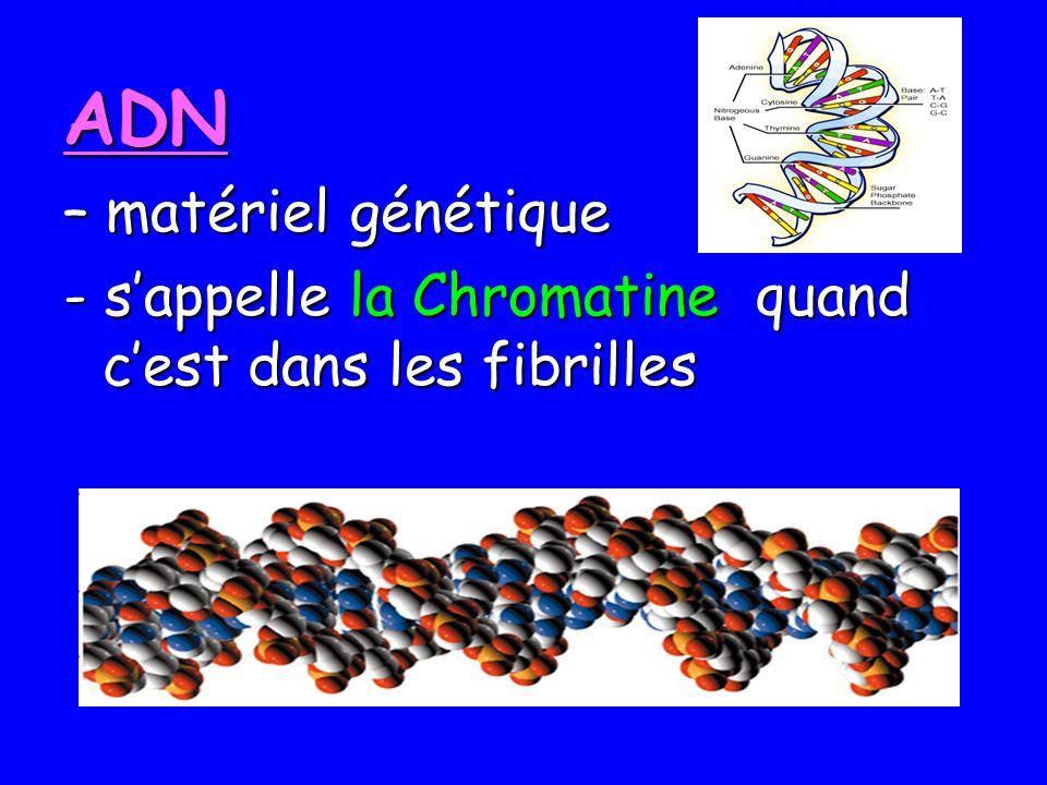 ADN – matériel génétique