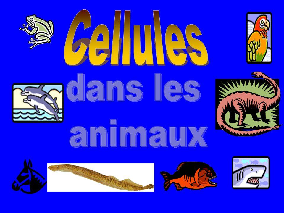 Cellules dans les animaux