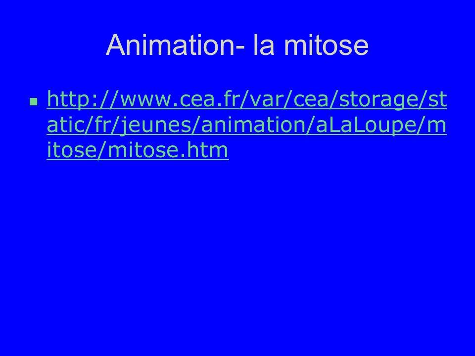 Animation- la mitose http://www.cea.fr/var/cea/storage/static/fr/jeunes/animation/aLaLoupe/mitose/mitose.htm.