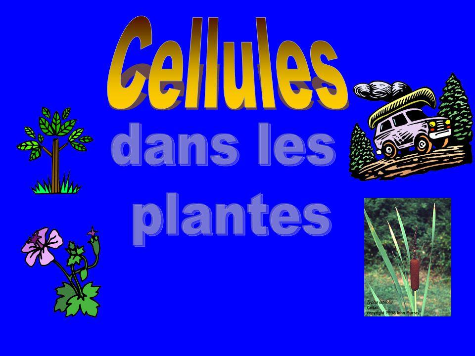 Cellules dans les plantes