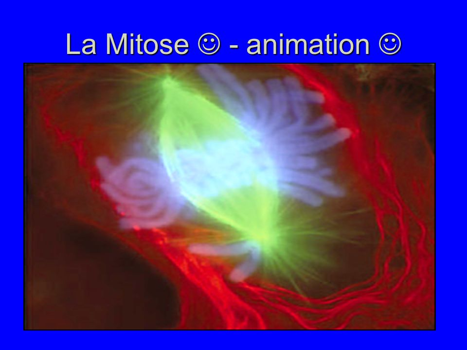La Mitose  - animation 