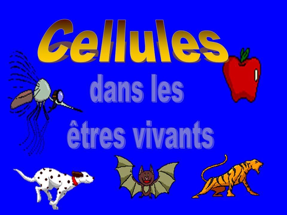 Cellules dans les êtres vivants