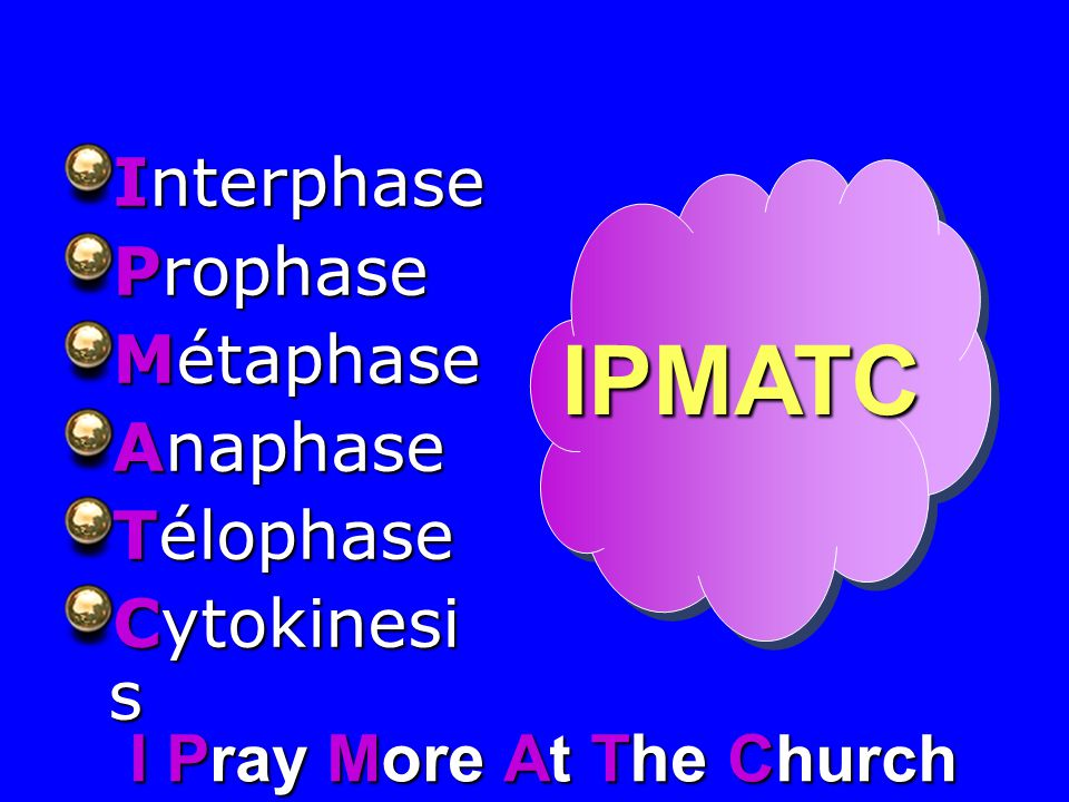 IPMATC Interphase Prophase Métaphase Anaphase Télophase Cytokinesis