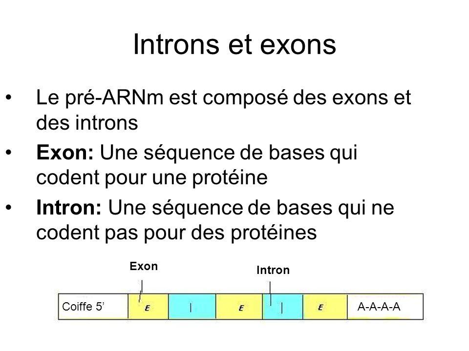 Introns et exons Le pré-ARNm est composé des exons et des introns