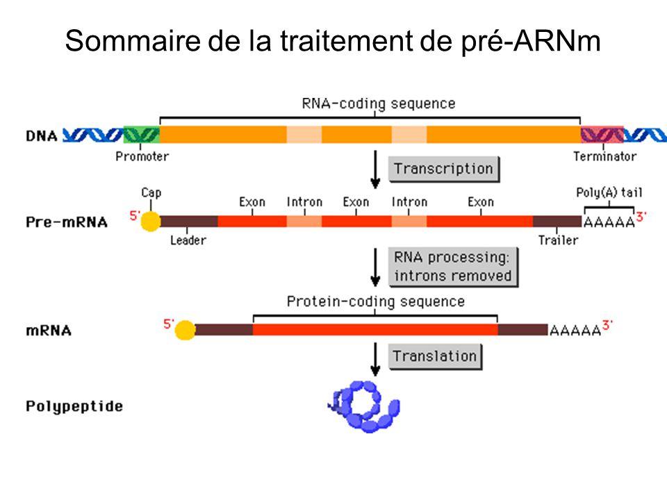 Sommaire de la traitement de pré-ARNm