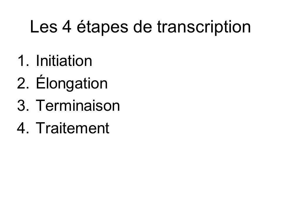 Les 4 étapes de transcription