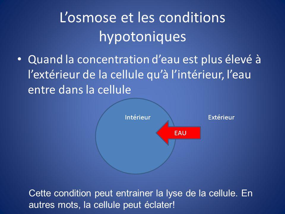 L'osmose et les conditions hypotoniques