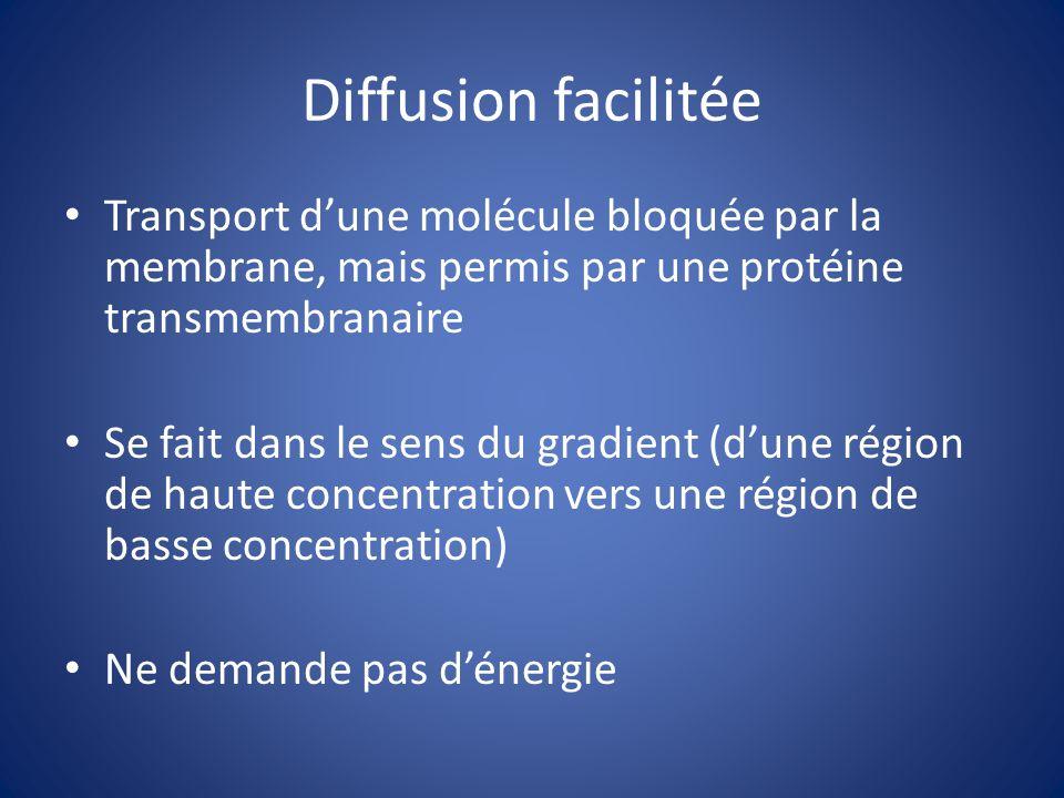 Diffusion facilitée Transport d'une molécule bloquée par la membrane, mais permis par une protéine transmembranaire.