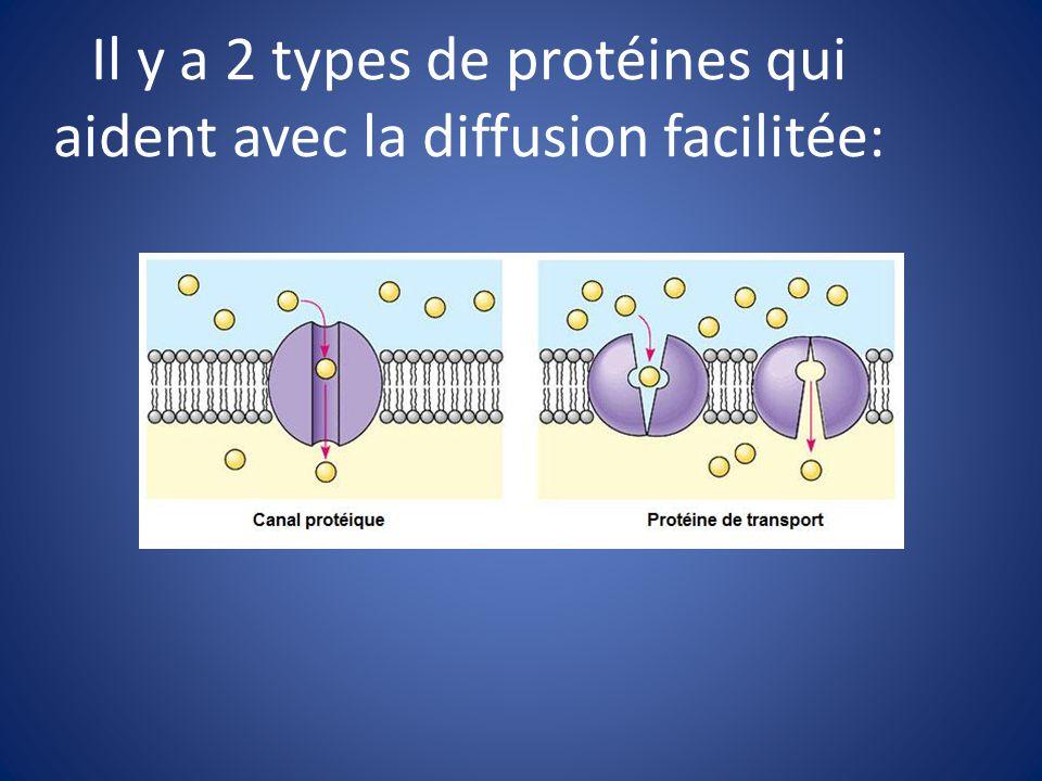 Il y a 2 types de protéines qui aident avec la diffusion facilitée: