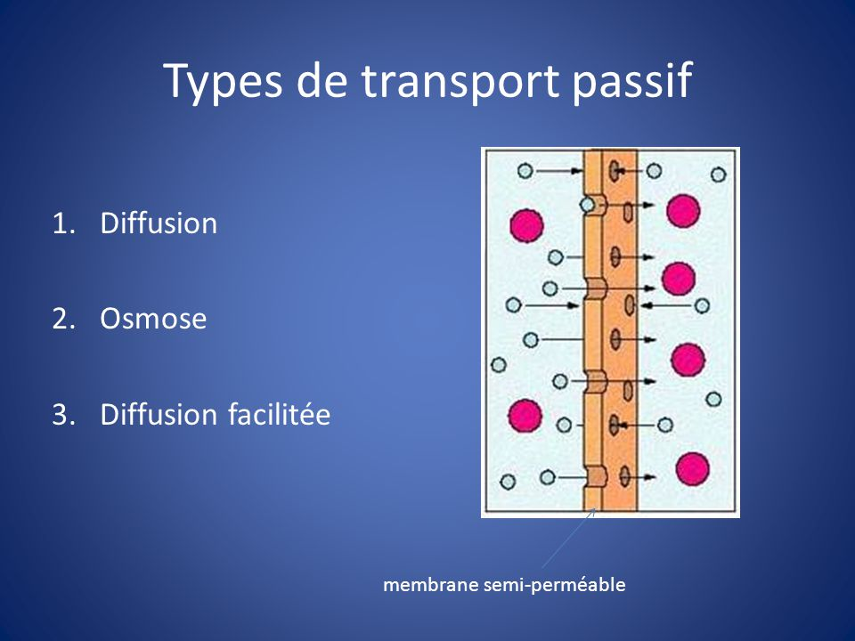 Types de transport passif