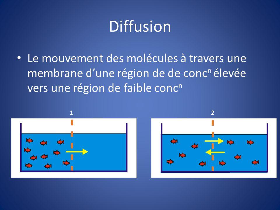 Diffusion Le mouvement des molécules à travers une membrane d'une région de de concn élevée vers une région de faible concn.