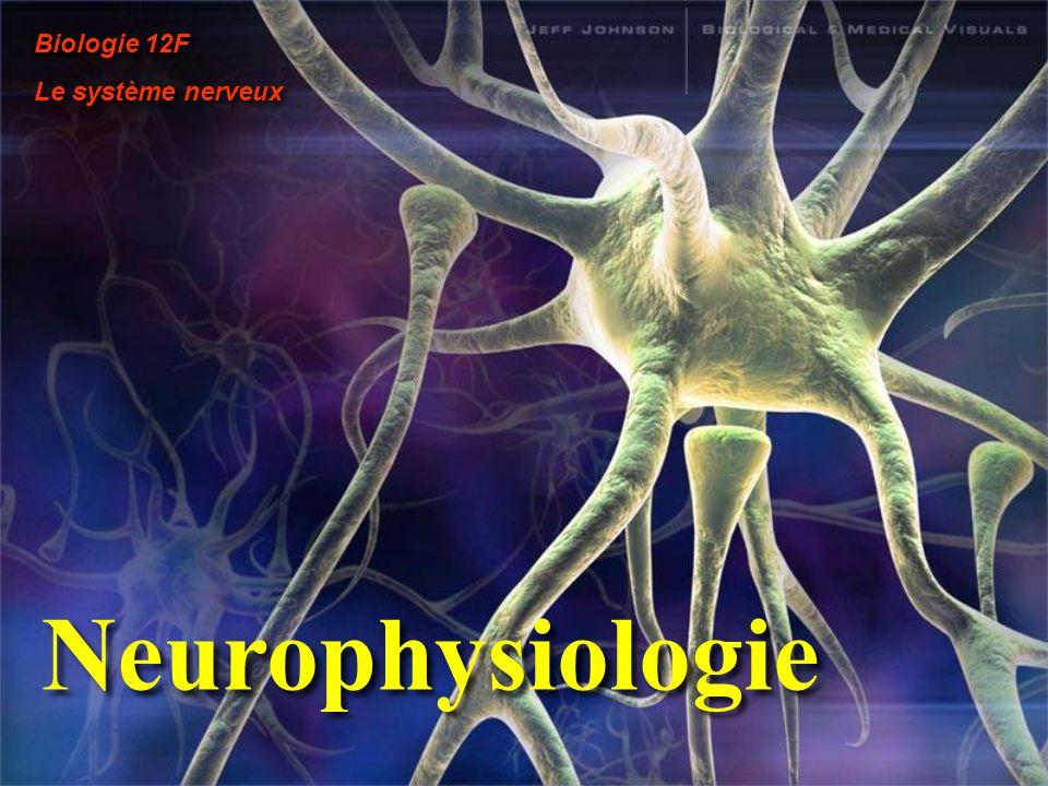 Biologie 12F Le système nerveux Neurophysiologie