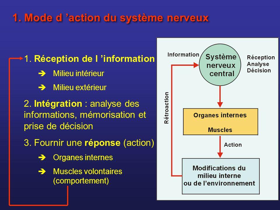 1. Mode d 'action du système nerveux