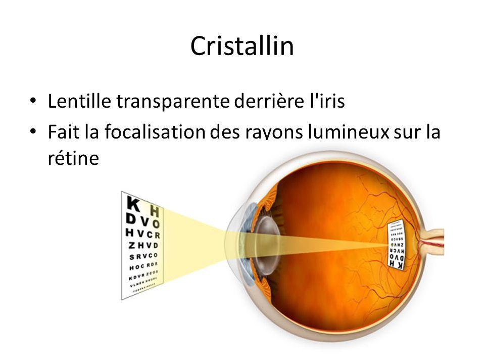 Cristallin Lentille transparente derrière l iris
