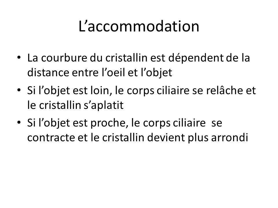 L'accommodation La courbure du cristallin est dépendent de la distance entre l'oeil et l'objet.