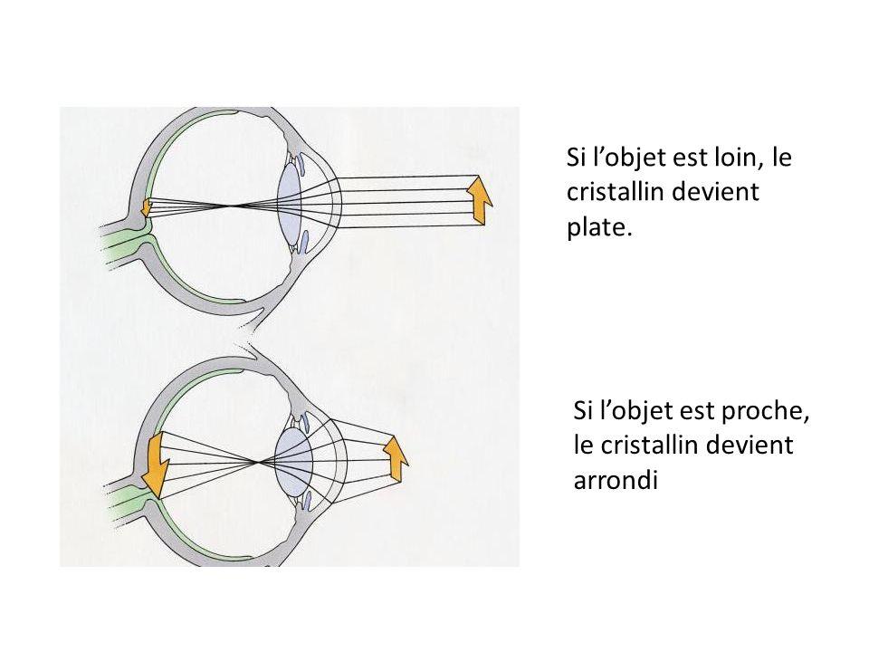 Si l'objet est loin, le cristallin devient plate.