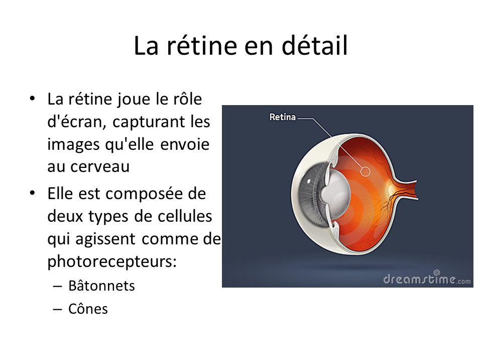 La rétine en détail La rétine joue le rôle d écran, capturant les images qu elle envoie au cerveau.
