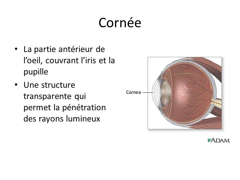 Cornée La partie antérieur de l'oeil, couvrant l'iris et la pupille