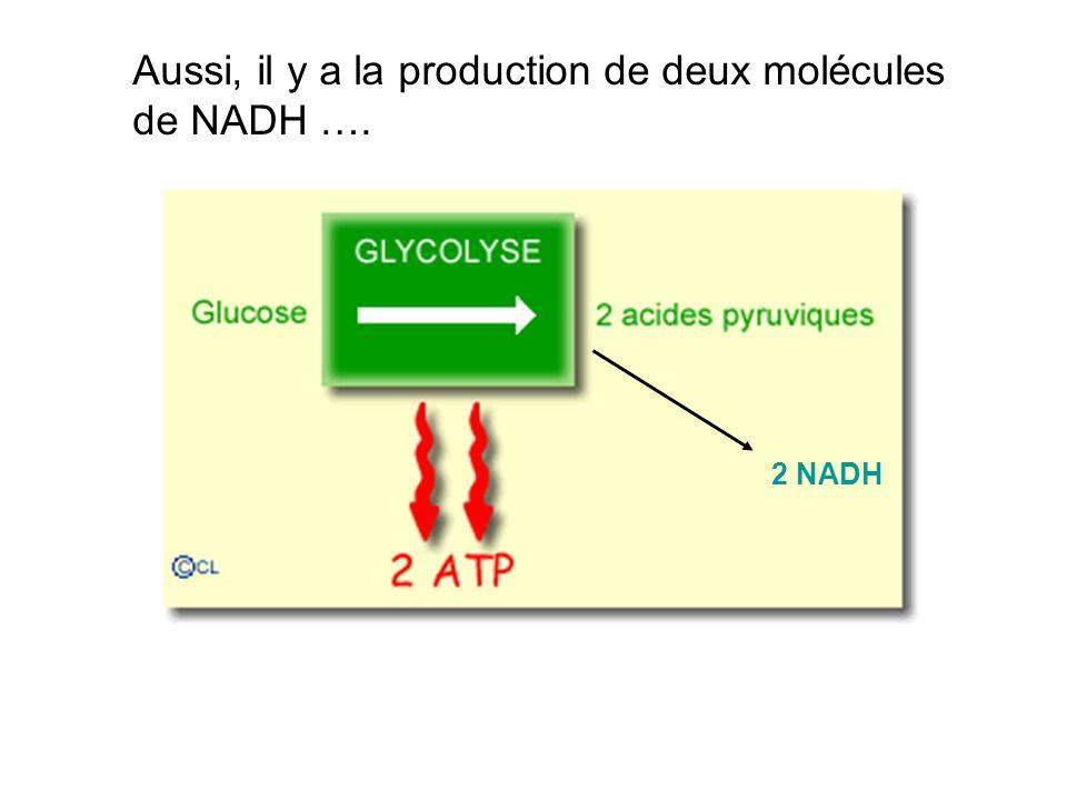 Aussi, il y a la production de deux molécules de NADH ….
