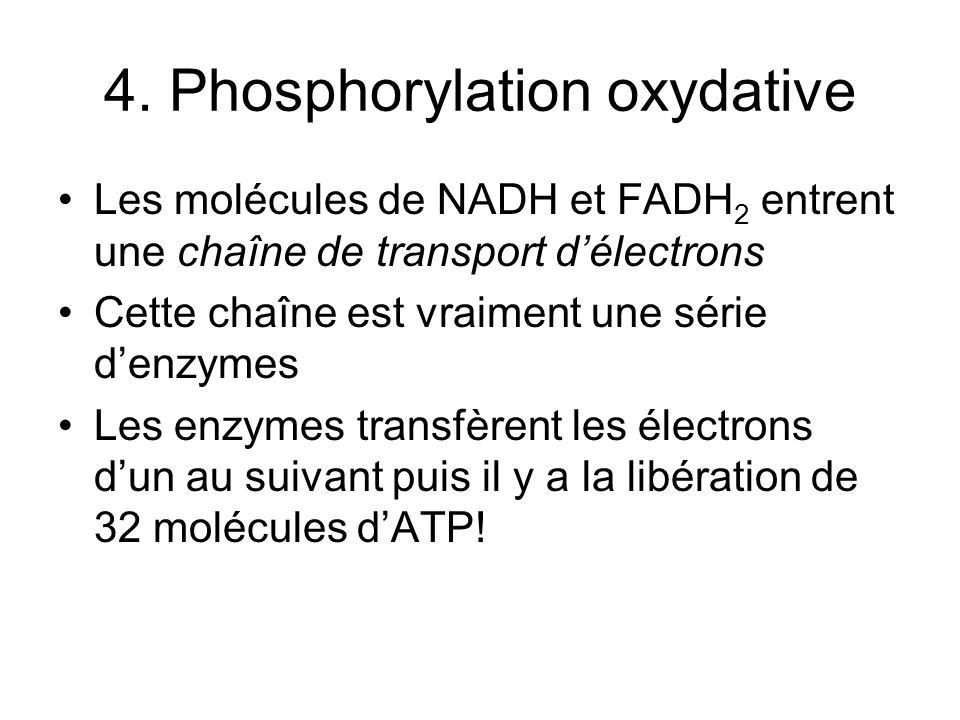 4. Phosphorylation oxydative