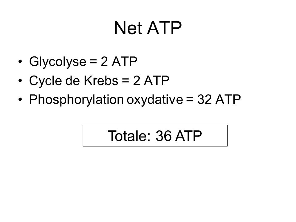 Net ATP Totale: 36 ATP Glycolyse = 2 ATP Cycle de Krebs = 2 ATP
