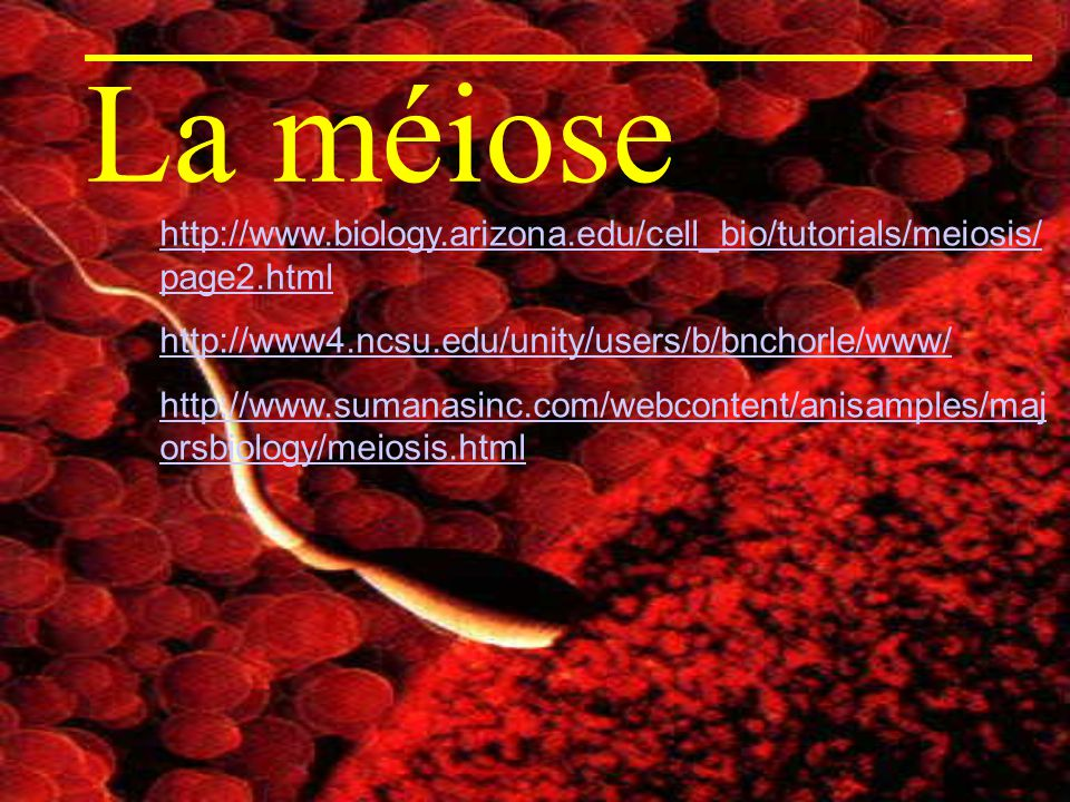 La méiose http://www.biology.arizona.edu/cell_bio/tutorials/meiosis/page2.html. http://www4.ncsu.edu/unity/users/b/bnchorle/www/