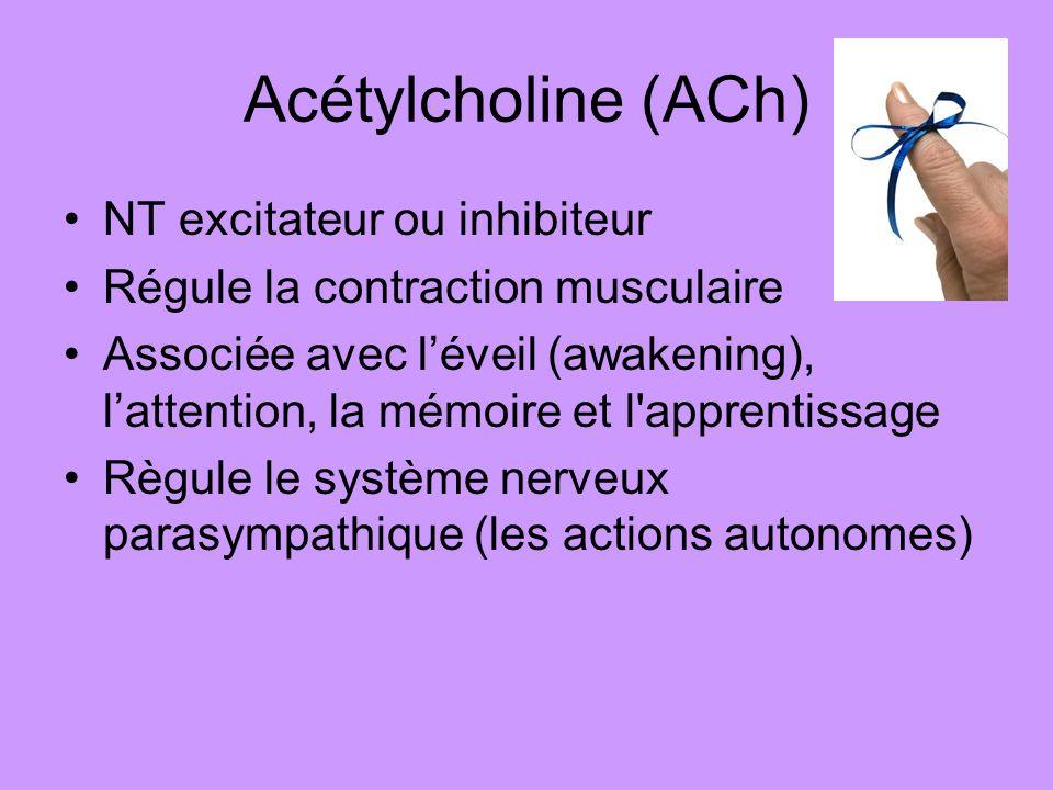Acétylcholine (ACh) NT excitateur ou inhibiteur