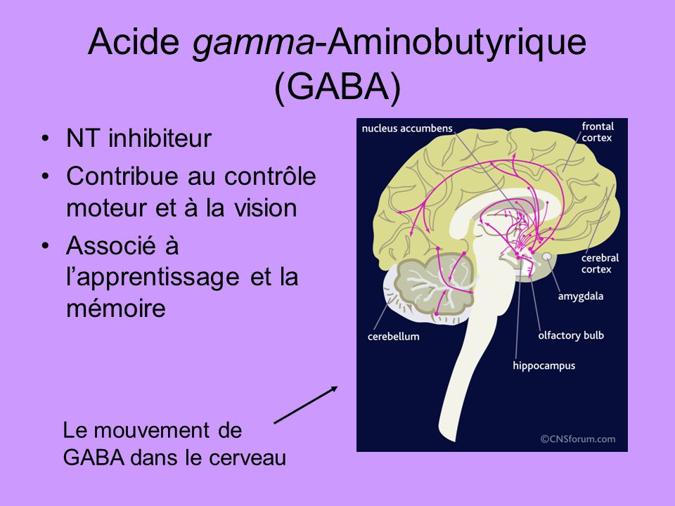 Acide gamma-Aminobutyrique (GABA)