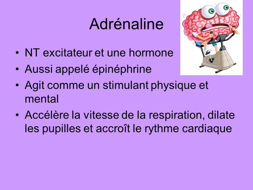 Adrénaline NT excitateur et une hormone Aussi appelé épinéphrine