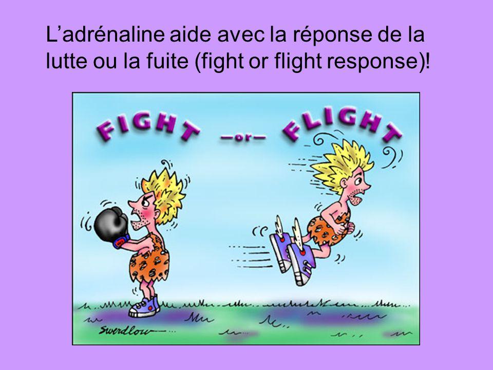 L'adrénaline aide avec la réponse de la lutte ou la fuite (fight or flight response)!