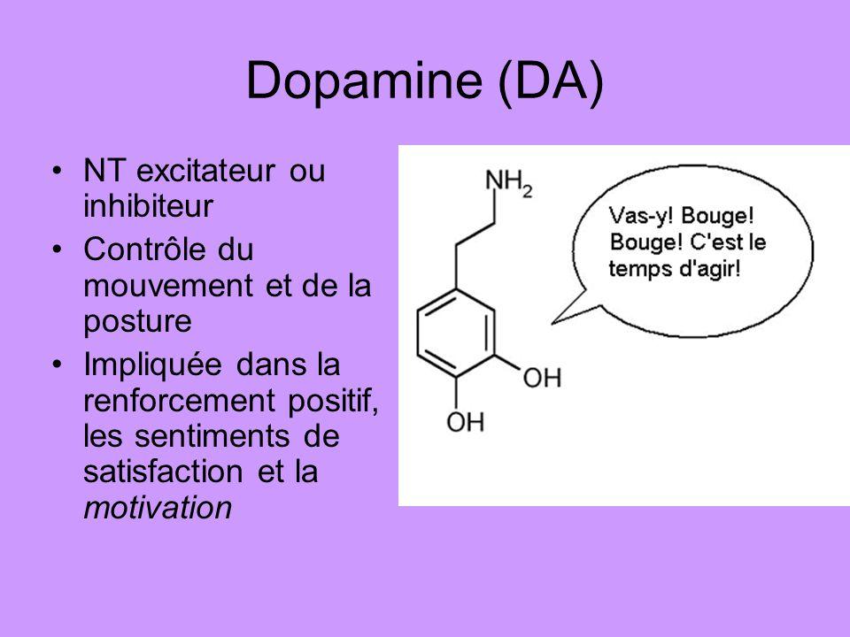 Dopamine (DA) NT excitateur ou inhibiteur