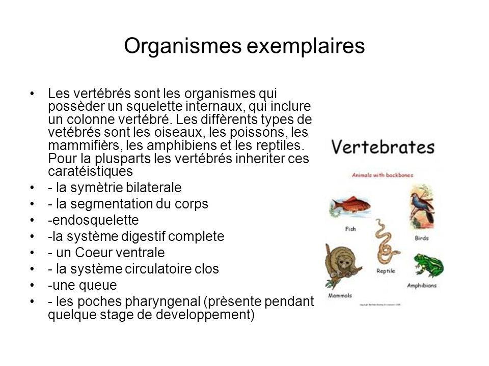 Organismes exemplaires