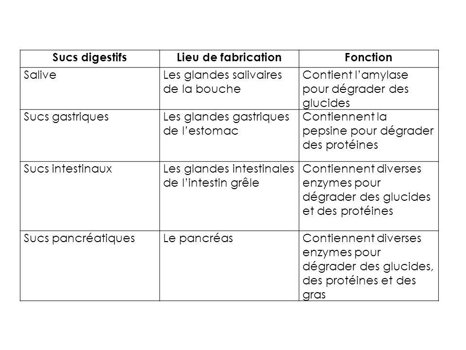 Sucs digestifs Lieu de fabrication. Fonction. Salive. Les glandes salivaires de la bouche. Contient l'amylase pour dégrader des glucides.