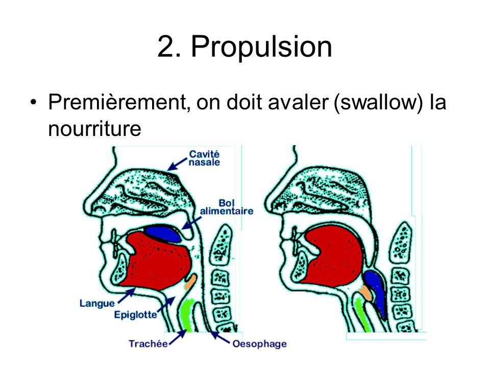2. Propulsion Premièrement, on doit avaler (swallow) la nourriture