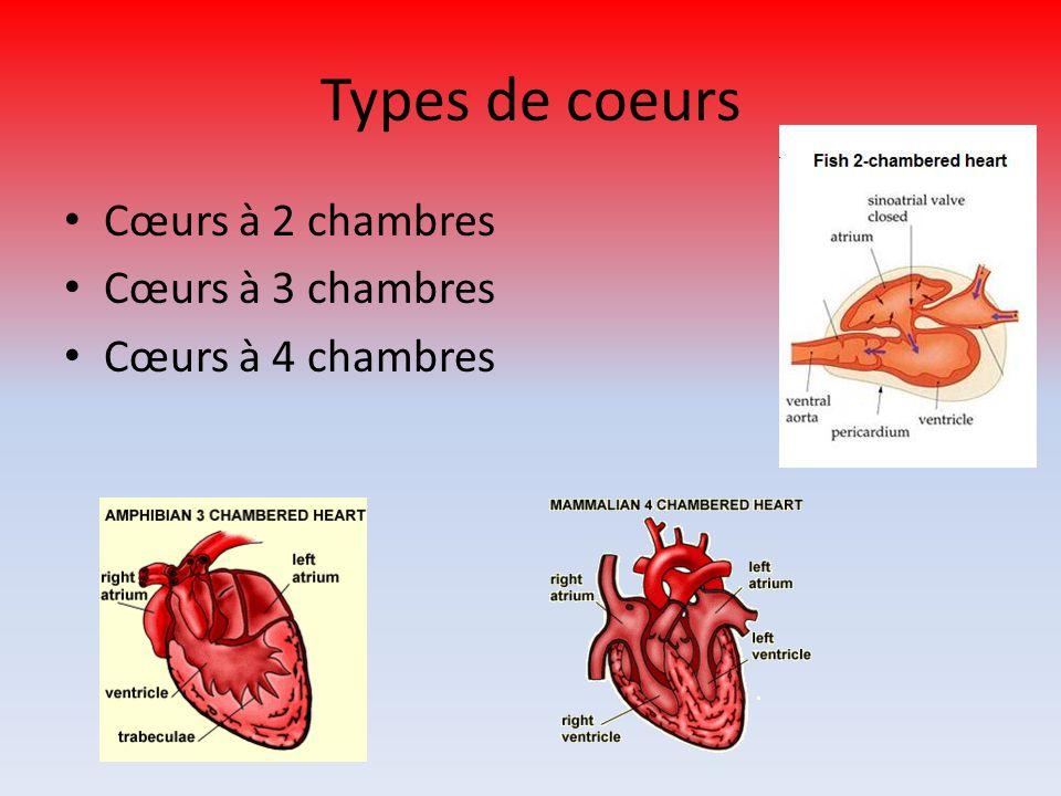 Types de coeurs Cœurs à 2 chambres Cœurs à 3 chambres