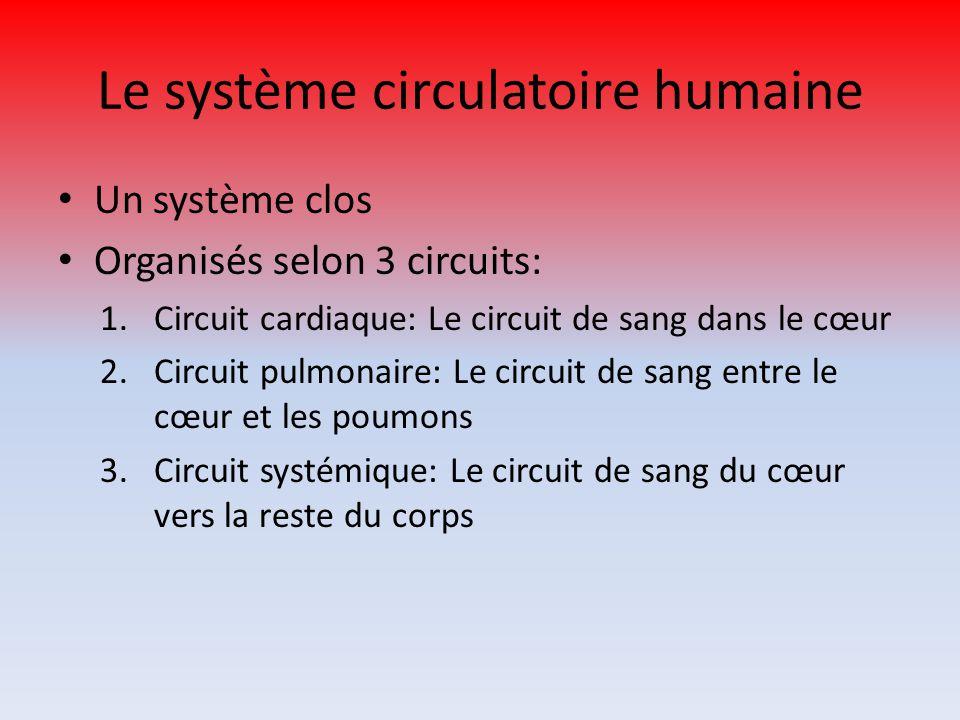 Le système circulatoire humaine