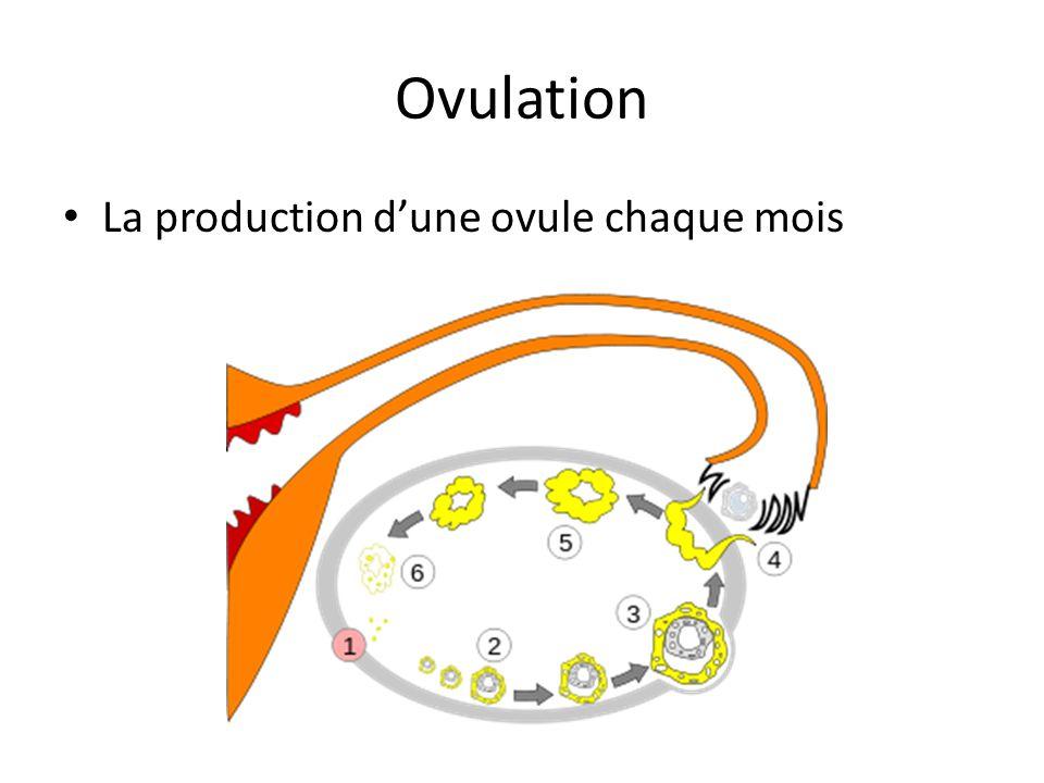 Ovulation La production d'une ovule chaque mois