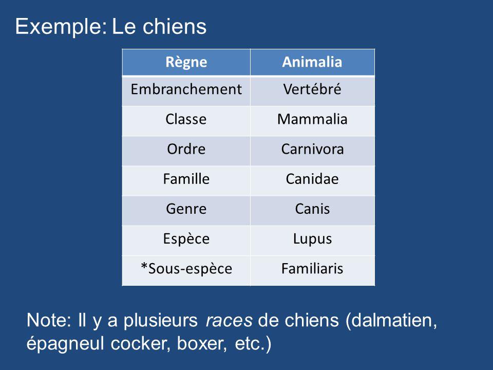 Exemple: Le chiens Règne. Animalia. Embranchement. Vertébré. Classe. Mammalia. Ordre. Carnivora.