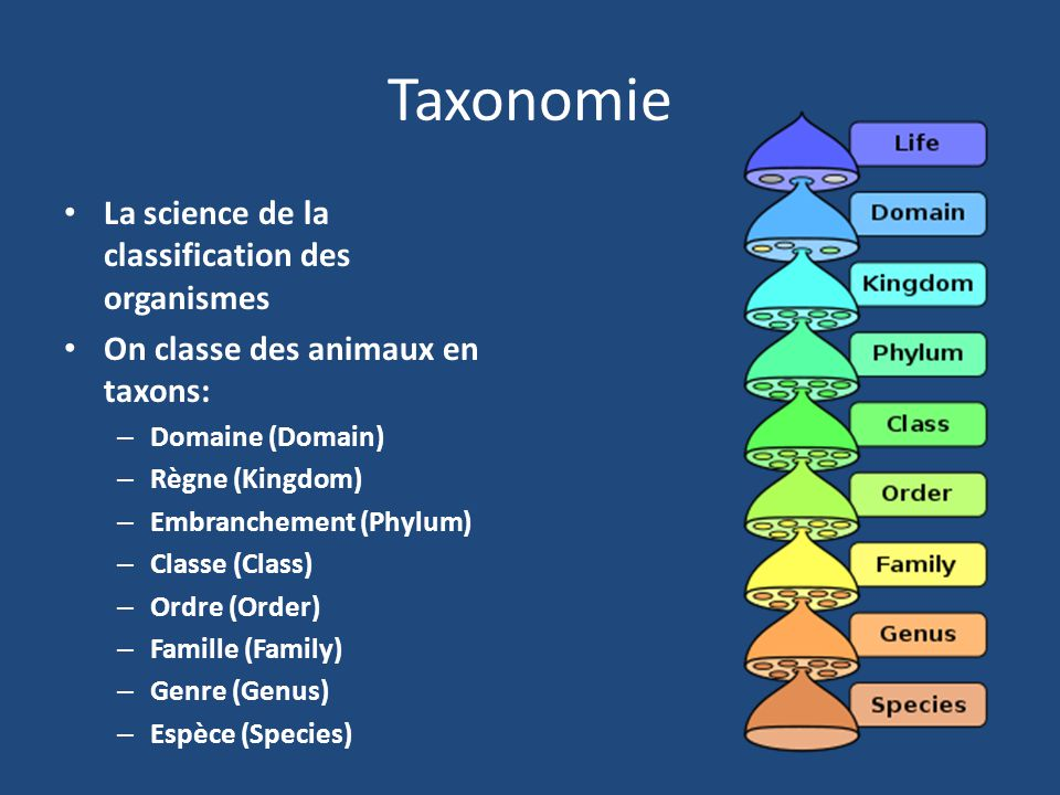 Taxonomie La science de la classification des organismes