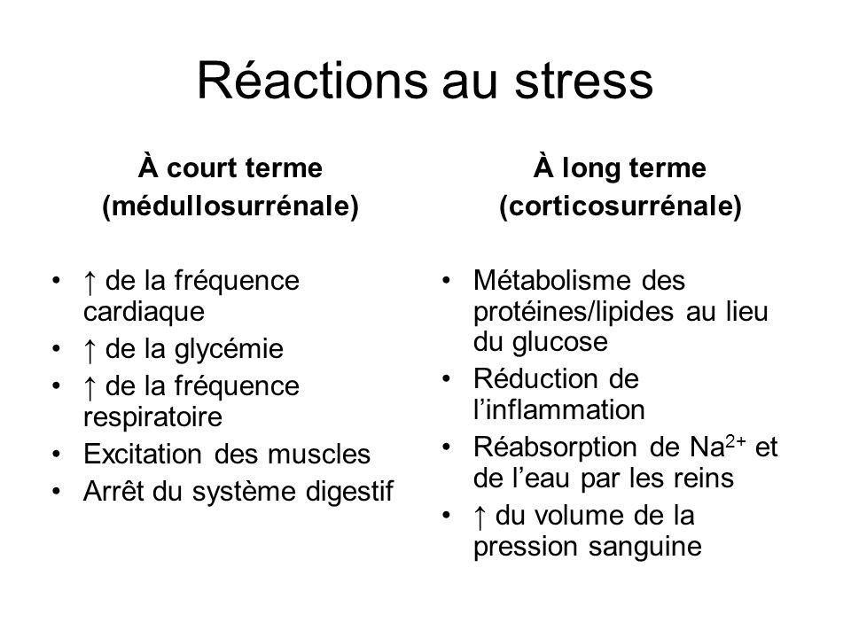 Réactions au stress À court terme (médullosurrénale)