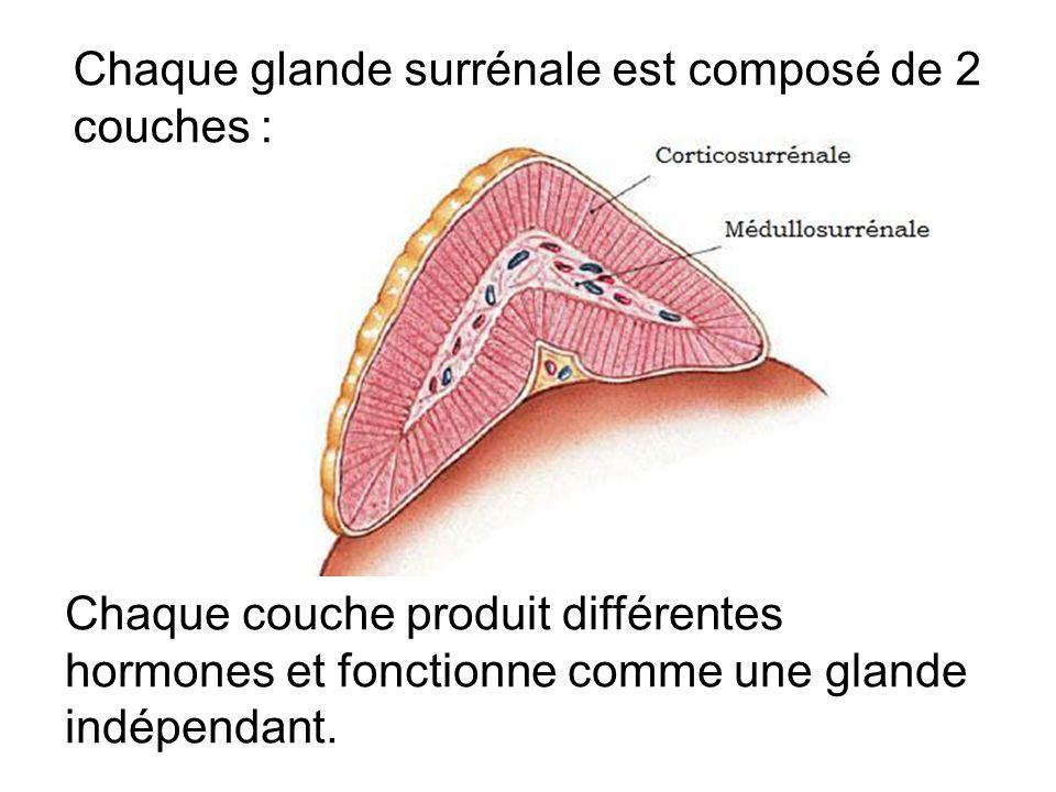 Chaque glande surrénale est composé de 2 couches :