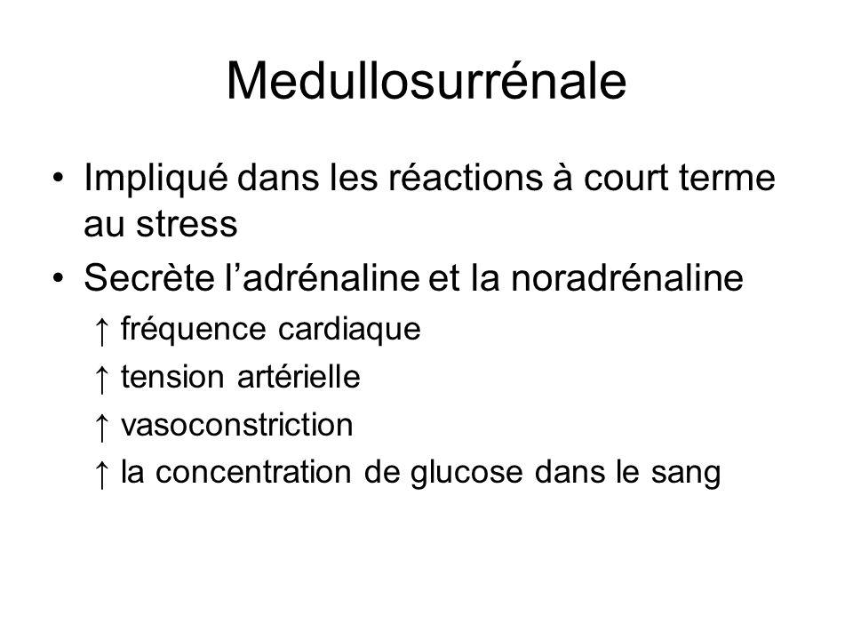 Medullosurrénale Impliqué dans les réactions à court terme au stress