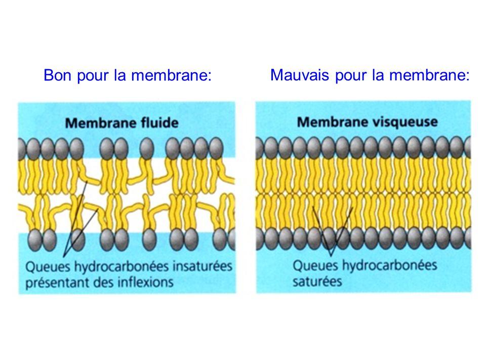 Bon pour la membrane: Mauvais pour la membrane: