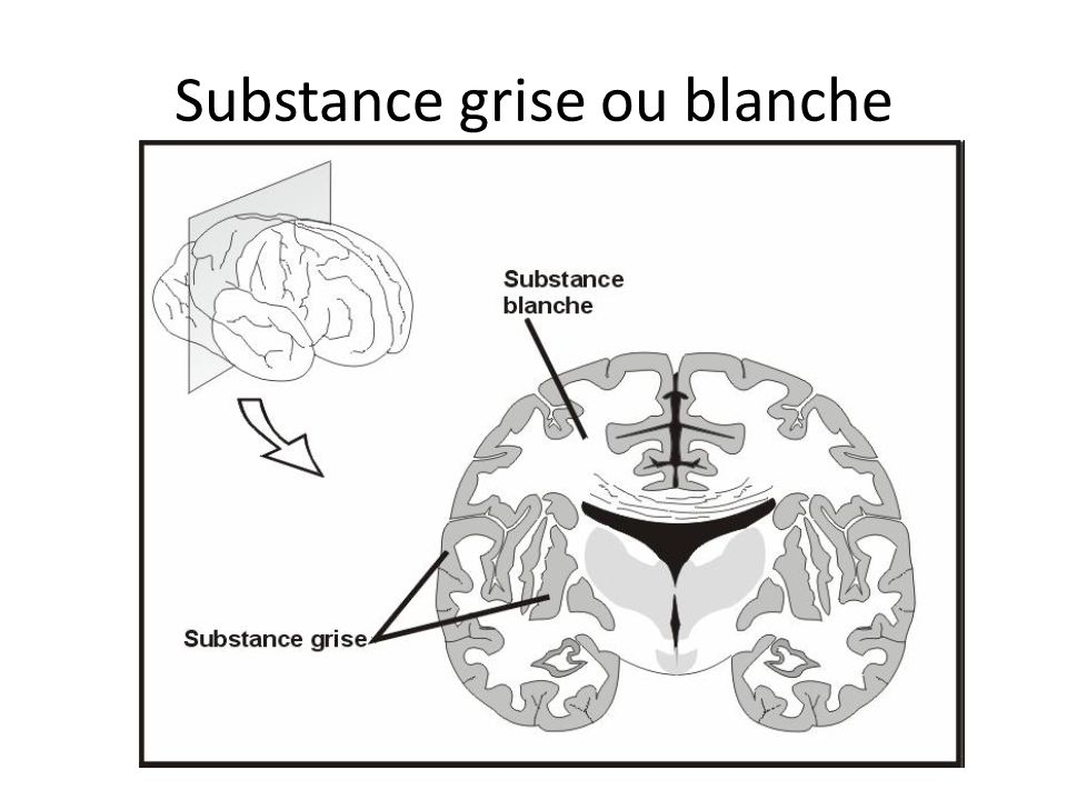 Substance grise ou blanche
