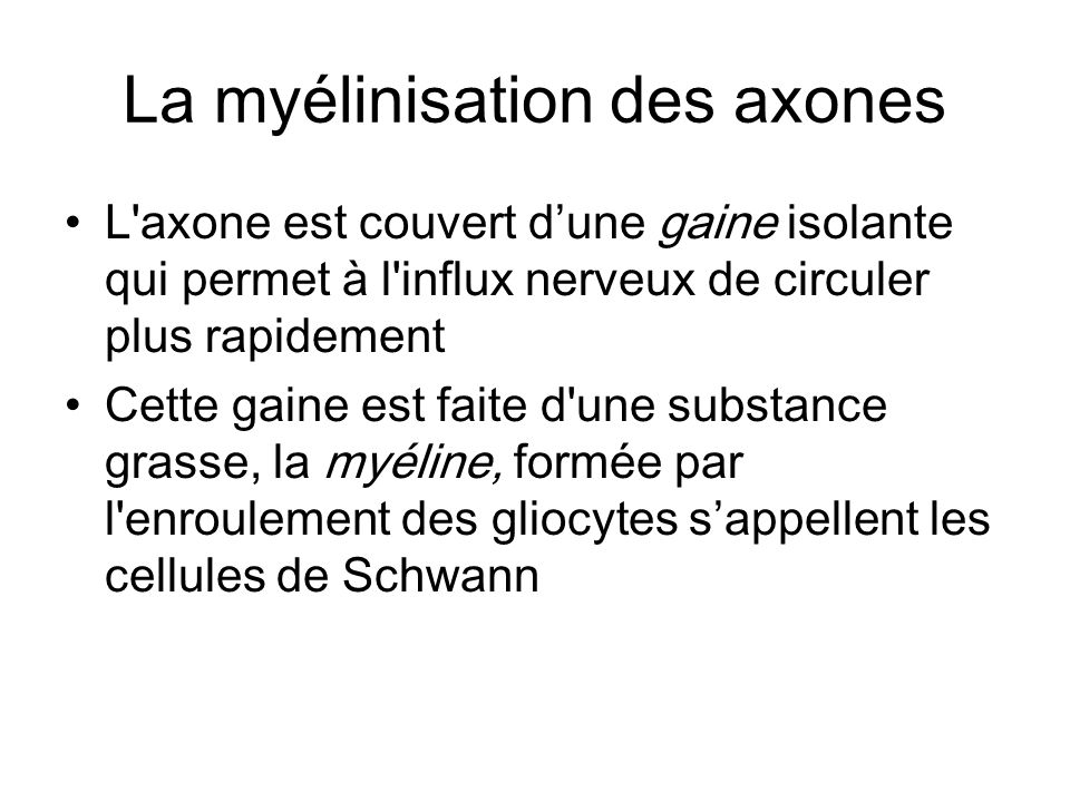 La myélinisation des axones