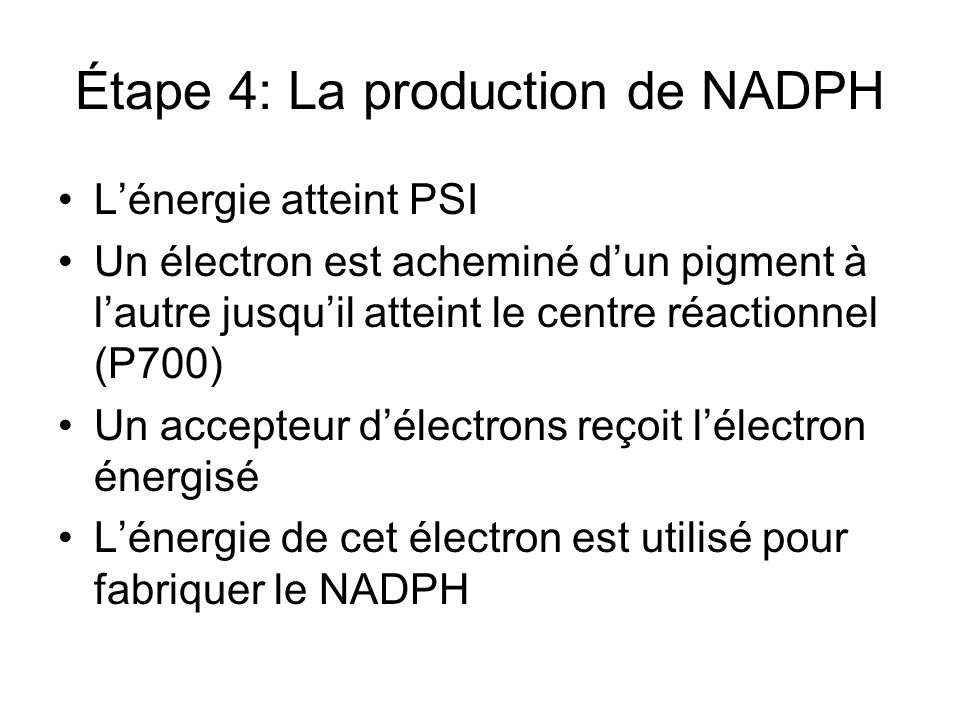 Étape 4: La production de NADPH