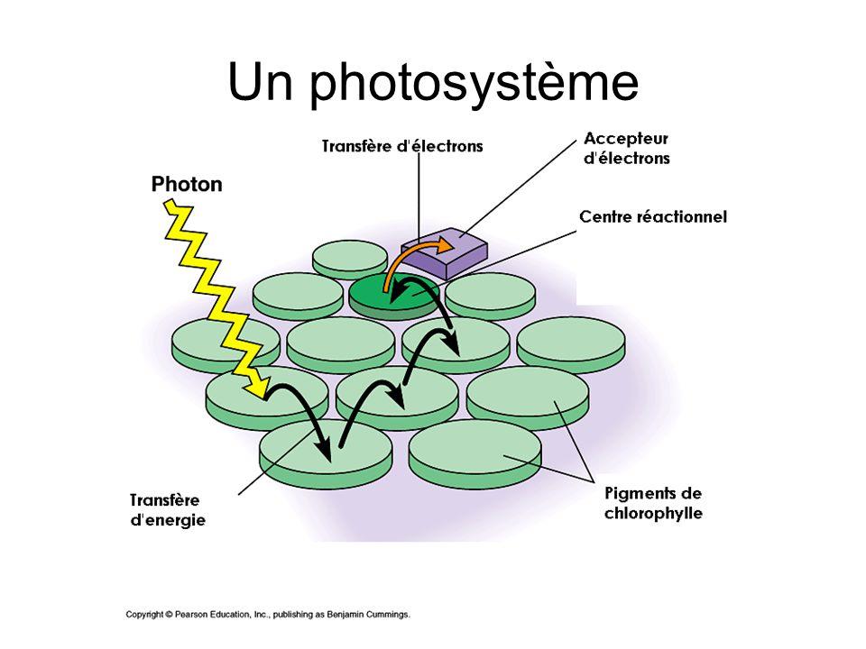 Un photosystème 3