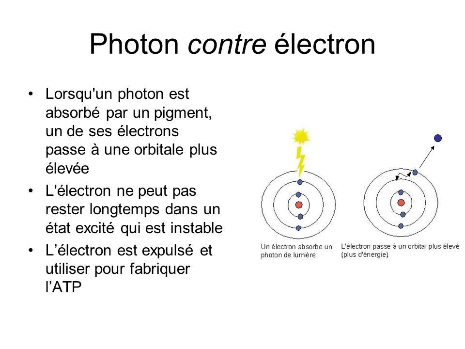 Photon contre électron