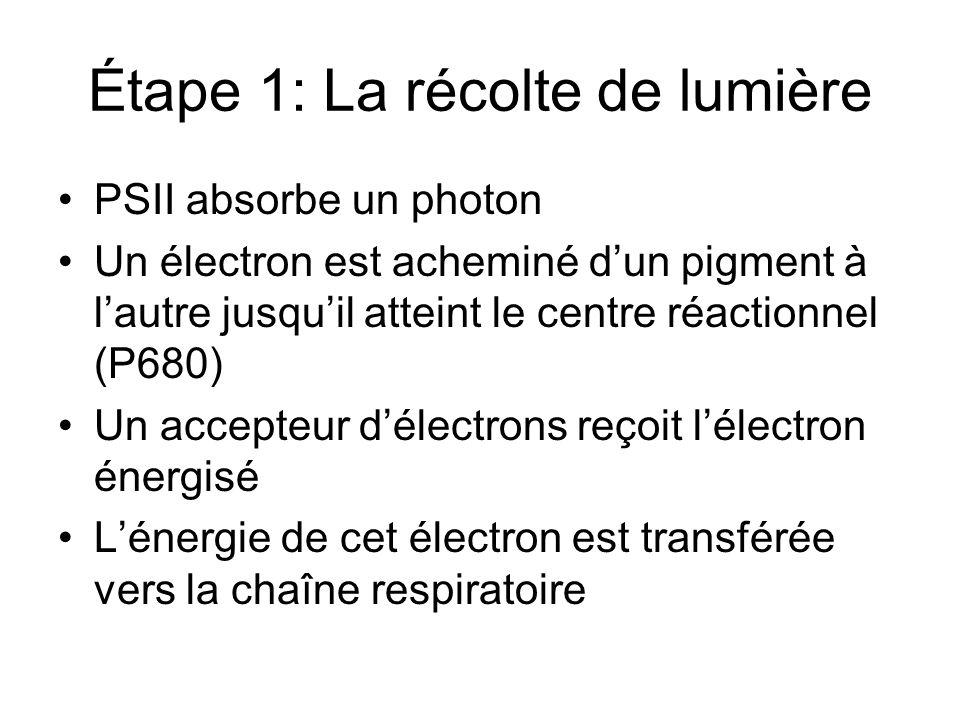 Étape 1: La récolte de lumière